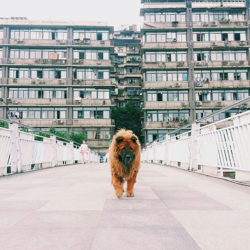 Dog Good Afternoon Mycity Chongqing China