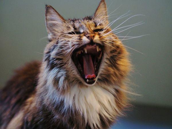 Cute Pets Cat😻 Animal Portrait Cat