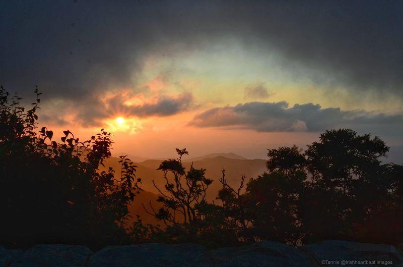 Blueridge Sunset Sunset_collection Sunset Silhouettes Sunset Craggy Gardens Blueridgemountains Blueridgeparkway Eerie Nopeople Evening Sky EyeEm Best Shots EyeEmNewHere EyeEm Nature Lover EyeEmBestPics Tree Multi Colored Scenics Tranquil Scene