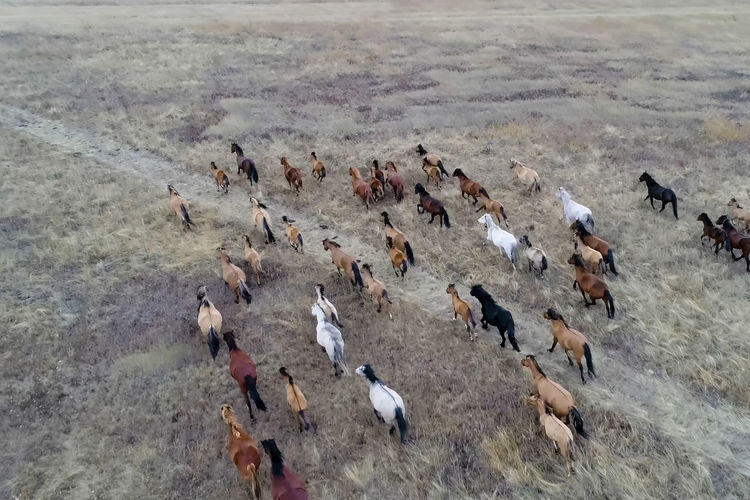 Animal Large Group Of Animals Animal Themes Animals In The Wild Bird Animal Wildlife Group Of Animals Vertebrate High Angle View Nature No People Day Land Water Outdoors Flock Of Birds Environment Field Mammal Herd