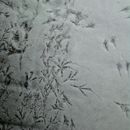 Vogelspuren Schnee Snow Winter FootPrint