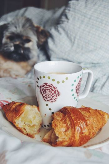 Break Close-up Coffee Coffee Cup Cup Dog Drink Food Food And Drink Freshness Home Indoors  Indulgence Laying In Bed My Favorite Breakfast Moment Preparation  Puppy Refreshment Sharing  MyworldoffoodTable Tea Cup Temptation The EyeEm Breakfast Club Time For Breakfast