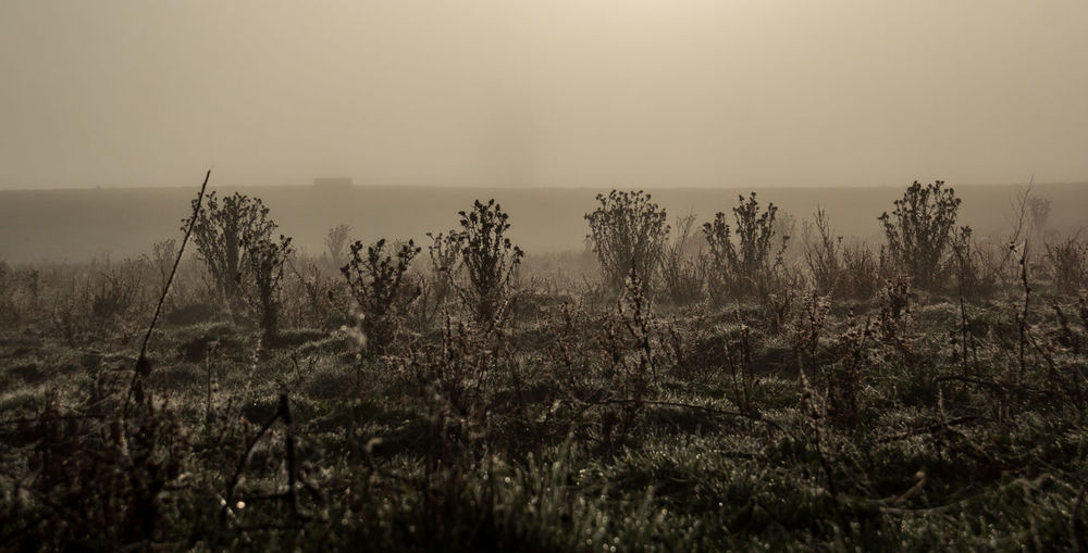 Cardos Bare Tree Beauty In Nature Cold Days Cold Temperature Coldweather Countryside Day Field Fog Fog Machine Growth Landscape Majestic Nature No People Outdoors Plant Remote Scenics Solitude Tourism Tranquil Scene Tranquility Wilderness WoodLand