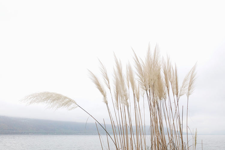 Water Plant Beauty In Nature Nature Tranquil Scene Scenics - Nature Non-urban Scene Close-up Outdoors Lake Sky Mountain Lake View Lakeside Horizon Horizon Over Water Reed Cloud - Sky Cloudy Winter Landscape Minimalism Minimal Nature Photography Natural Beauty