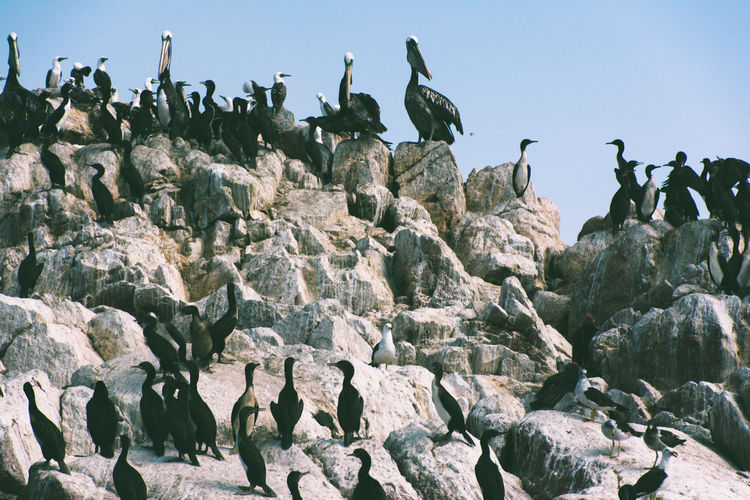 High Angle View Of Cormorants On Rocky Shore
