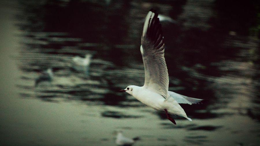 Bird Photography Birdlover Nikon D7100 EyeEm Best Shots Bestpicoftheday EyeEm Nature Lover