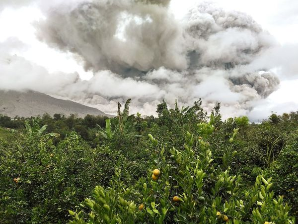 Tree Accidents And Disasters Cloud - Sky Social Issues Environment Nature Mountain No People Growth Mountain Peak Forest Beauty In Nature Scenics Sky Day Outdoors Freshness Eruption