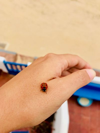 Nueva amiga Mariquita♥ Human Hand Human Body Part Hand Invertebrate Insect One Person Body Part Animal Wildlife Focus On Foreground Ladybug Small Animals In The Wild Close-up