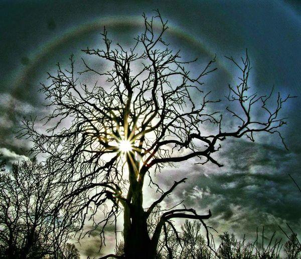 Sweden Sky Tree