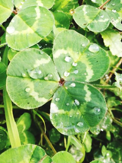 Leaf Green Color Nature Growth Plant Beauty In Nature Water