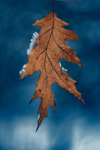 Close-up of maple leaf against sky