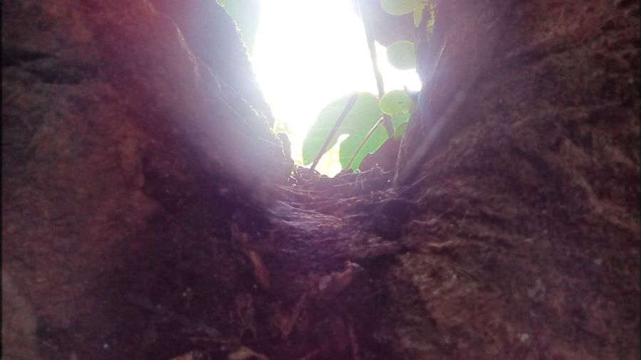 Low angle view of plants against trees