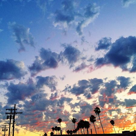 City of angels Sunset Los Angeles, California Plam Trees