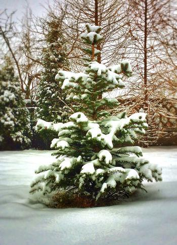 Cold Cold Temperature Day Frozen No People Snow Tree White White Color Winter