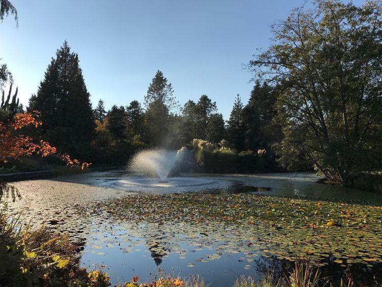 Water Nature Tree Splashing Scenics Spraying