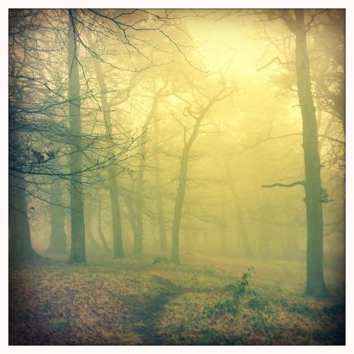 Misty Morning IPSWebsite Hipstamatic Beacon Hill Mist Misty Morning Trees The Great Outdoors - 2015 EyeEm Awards