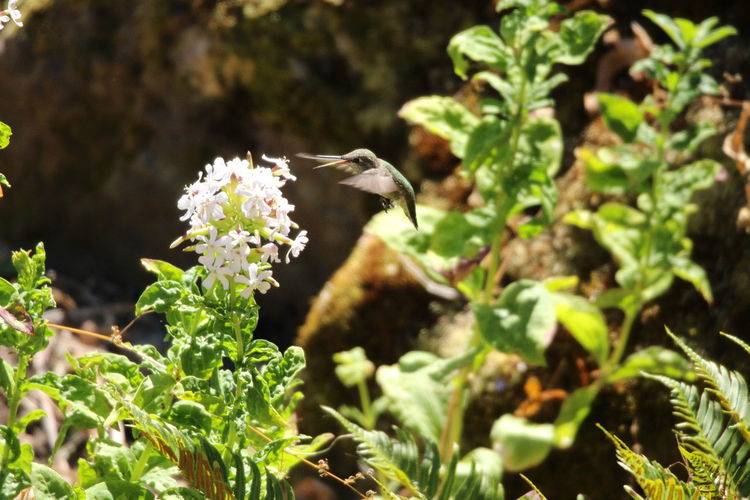 Close-up of a bird flying over white flowering plants
