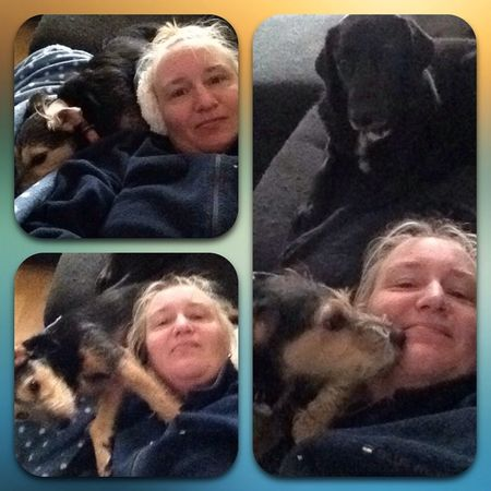 morning snuggle with my babies Mydogs Cute Dogs Thatsmydog Lovemydogs