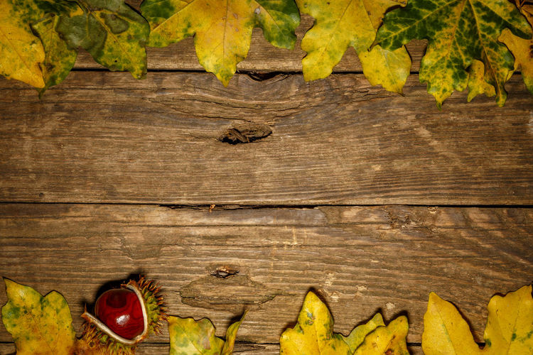 Close-up of fruits and leaves on wooden table