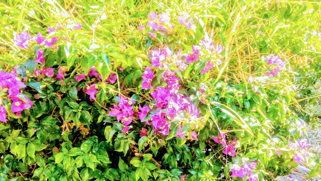 BUSH Beauty In Nature Day Flower Flower Head Fragility Freshness Grass Green Color Growth High Angle View Leaf Multi Colored Nature No People Outdoors Plant Purple