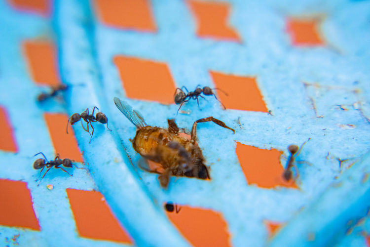 Insects were eaten Close-up Metal Orange Color No People Selective Focus Blue Day Wall - Building Feature Outdoors Full Frame Animal Backgrounds Animal Themes High Angle View Nature Food Shape White Color Text Red