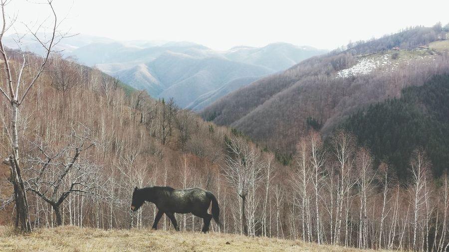 Mountain Animal Themes Beauty In Nature Nature Outdoors Ursici Hunedoara