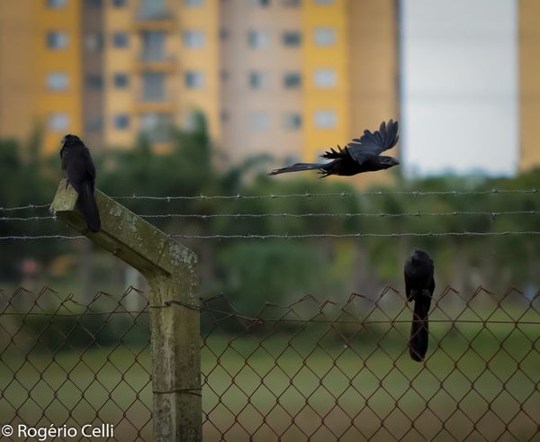 Nature Vibes | Birds in the air Bird Animal Themes Focus On Foreground Animals In The Wild Animal Wildlife Day One Animal Outdoors Mid-air No People Full Length Spread Wings Sparrow Sky Nature Raven - Bird Close-up Perching