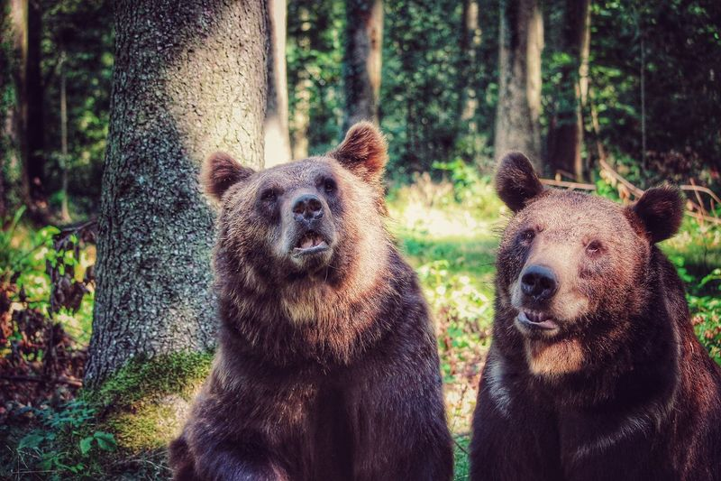 Close-up of bears sitting in forest
