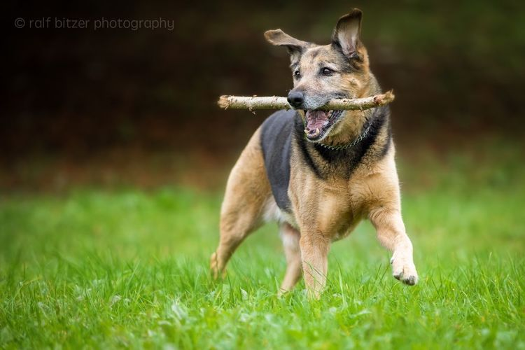 Grass Animal Themes Dog One Animal No People Mammal Growth Domestic Animals Pets Outdoors Nature Day Animal