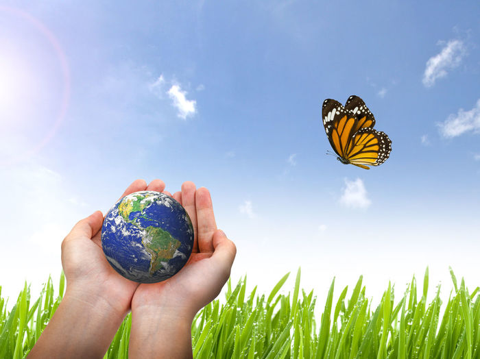 Cropped hands holding globe against butterfly flying over plants against sky