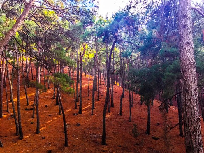 Green Wood Tree Forest Nature First Eyeem Photo