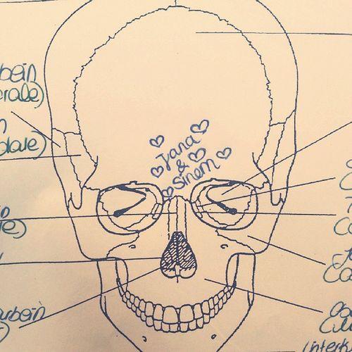 Schule Endodontologie♥ LF5 Zahnfeenuntersich SinekmeinekleineFliege🍍