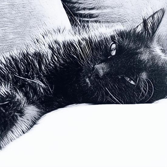 Giolletta Artcat I Love My Cat ❤ Beatiful Cat 😻😻😻❤️ 😻my Sweety Cat😻 Kitten 🐱 Domestic Cat Black Cat Photography One Cat One Animal Cat Animal Black Cat I Love My Cat Cat♡ Black Cat Is Just So Beautiful. Cat Photography Cats 🐱 Art Cat