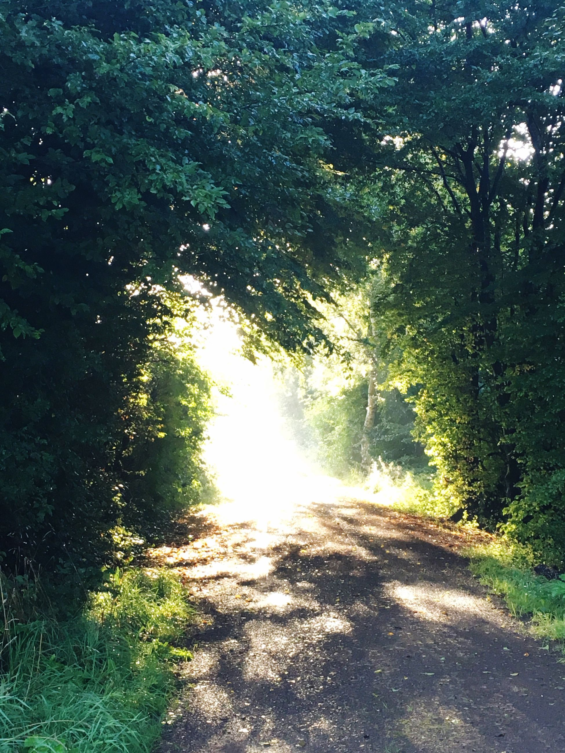 sunlight, tree, nature, sunbeam, day, no people, forest, beauty in nature, shadow, tranquility, growth, tranquil scene, outdoors, scenics, green color