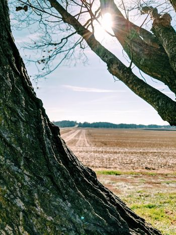 Tree Nature Beauty In Nature Tree Trunk Scenics Outdoors Landscape Day Rural Scene No People Branch Sky