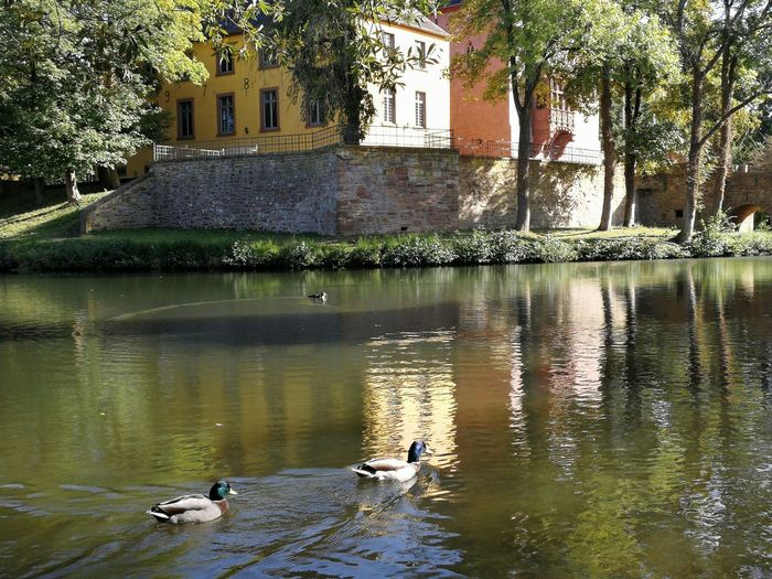 Castle Burgau Dueren Castle Burgau Dueren Bird Tree Water Swan Swimming Lake Reflection Architecture Building Exterior Built Structure