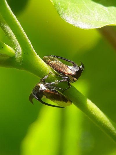 2 treehopper