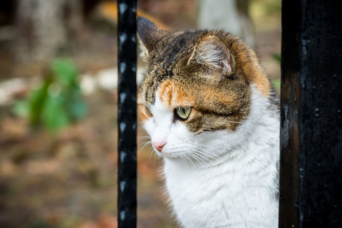 Cats of Istanbul Alertness Animal Head  Animal Themes Cat Curiosity Domestic Animals Feline Istanbul Looking At Camera Mammal Mosque One Animal Pets Portrait Relaxation S Sitting Stray Cat Sultanahmet Tourist Turkey Turkish Whisker The Portraitist - 2016 EyeEm Awards