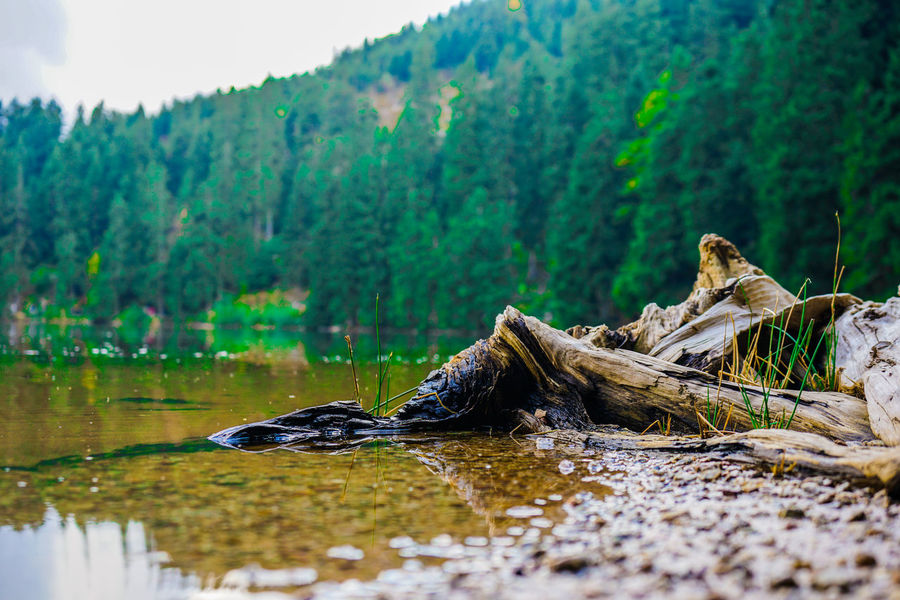 Nature Nature Photography Tree Trees Beauty In Nature Blackforest Day Lake Landscape Nature Nature_collection No People Outdoors Plant Tree Water