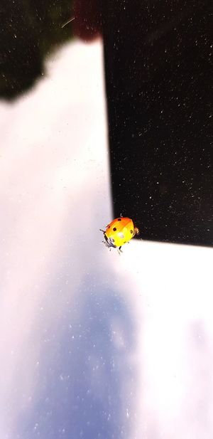 Travelling Ladybug Ladybug LadyBugLove Orange Color Water Flying Insect Full Length Bird Close-up