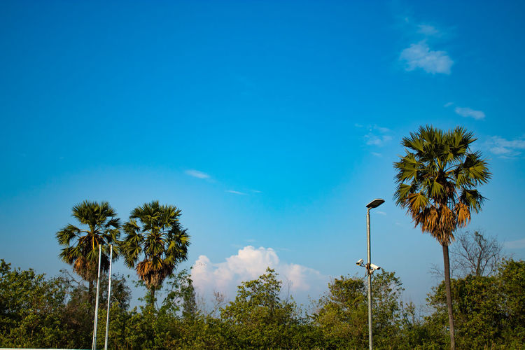 View of the sky and the clouds. Beauty In Nature Blue Cloud - Sky Day Flower Growth Lighting Equipment Low Angle View Nature No People Outdoors Palm Tree Plant Scenics - Nature Sky Street Street Light Tranquil Scene Tranquility Tree Tropical Climate