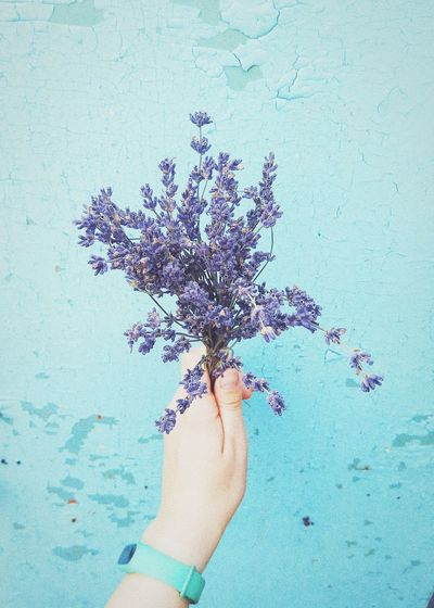 Lavender Lavender Flower Lavenderflower Lavender Colored Human Hand Ink Close-up Flower Head Blooming Single Flower In Bloom