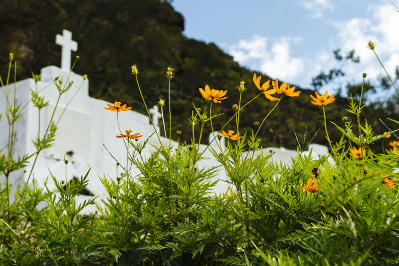 flowersblooming in a tombstone in the Byzantine cemetery, in the city of Mucugê Cemetery Cemeterybeauty Chapada Diamantina Mucugê Beauty In Nature Blooming Cemitério Bizantino Flower Growth Nature No People Outdoors Plant