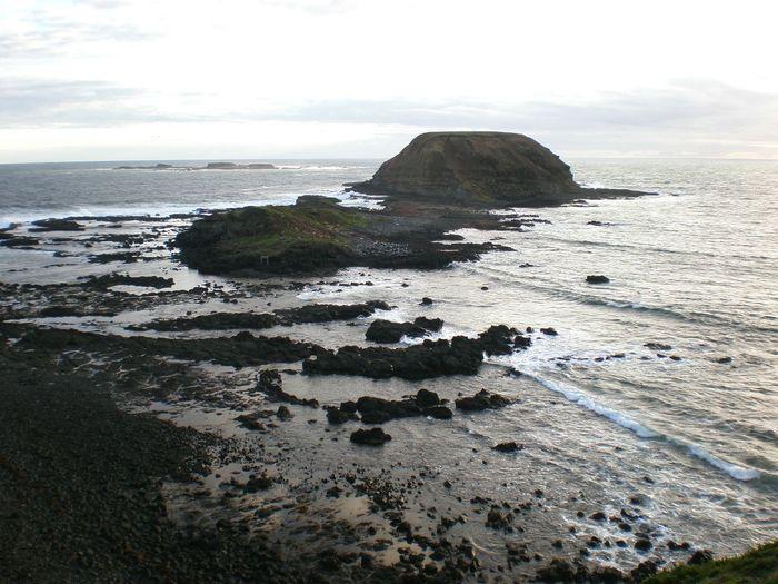 🎋 Seashore