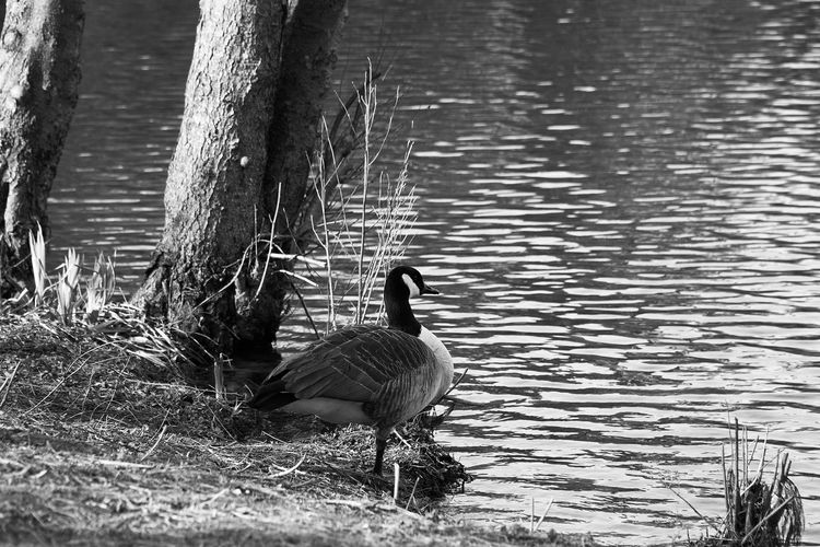 still waiting Goose Lake Water Monochrome Lucky's Monochrome Blackandwhite Photography Black And White Mood Lucky's Mood Fine Art Photography Waiting Melancholy Sadness Shootermag The Great Outdoors - 2017 EyeEm Awards Contrast Tranquility Tranquil Scene EyeEm Gallery Monoart Beauty In Nature Landscape