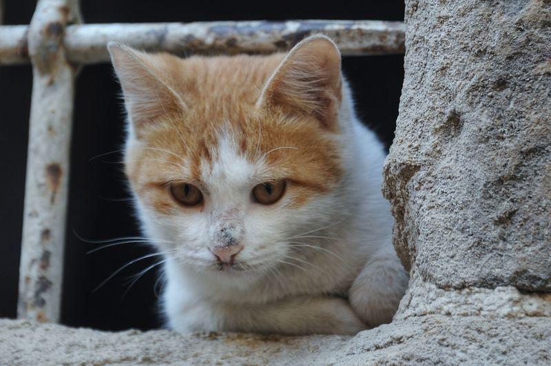 cat.. EyeEm
