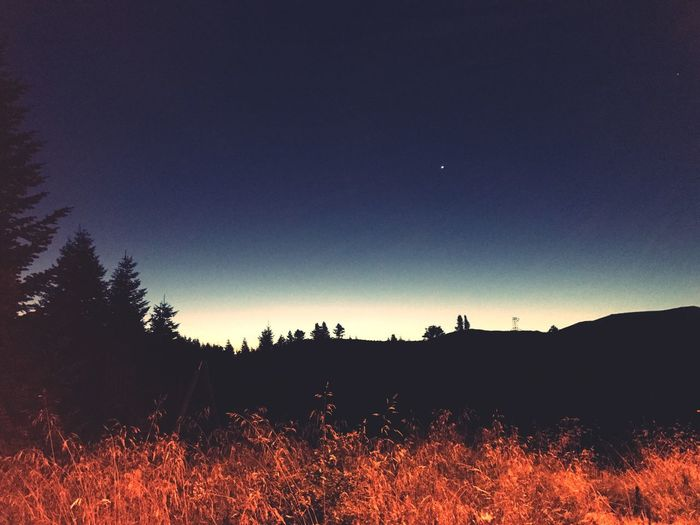 Nature Silhouette Field Night Landscape Beauty In Nature Moon Outdoors Clear Sky Scenics Tree No People Sky Grass