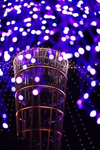 Illumination Night Enoshima Seacandle Picture