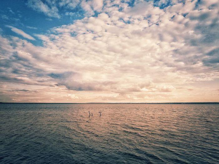 Sunset Bird Flamingo Water Sea Sunset Low Tide Beach Sand Salt - Mineral Sky