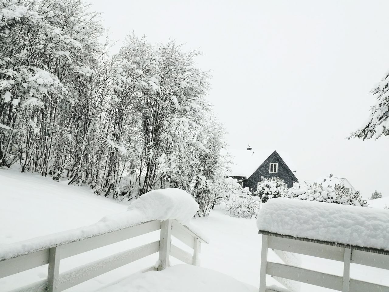 winter, snow, cold temperature, weather, nature, white color, frozen, outdoors, tree, clear sky, day, no people, tranquility, scenics, tranquil scene, beauty in nature, landscape, snowing, sky, building exterior, architecture